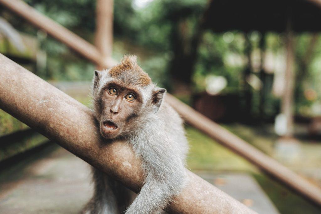 10 days in Bali, Monkey Forest, Ubud