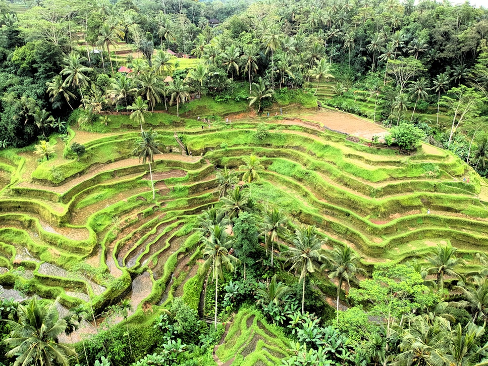 Must see in Bali: Tagalong Rice Terraces