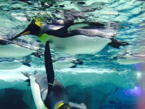 Sea World, Surfers Paradise, Australia