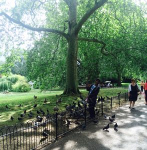 Man feeding birds in St. James Park, London