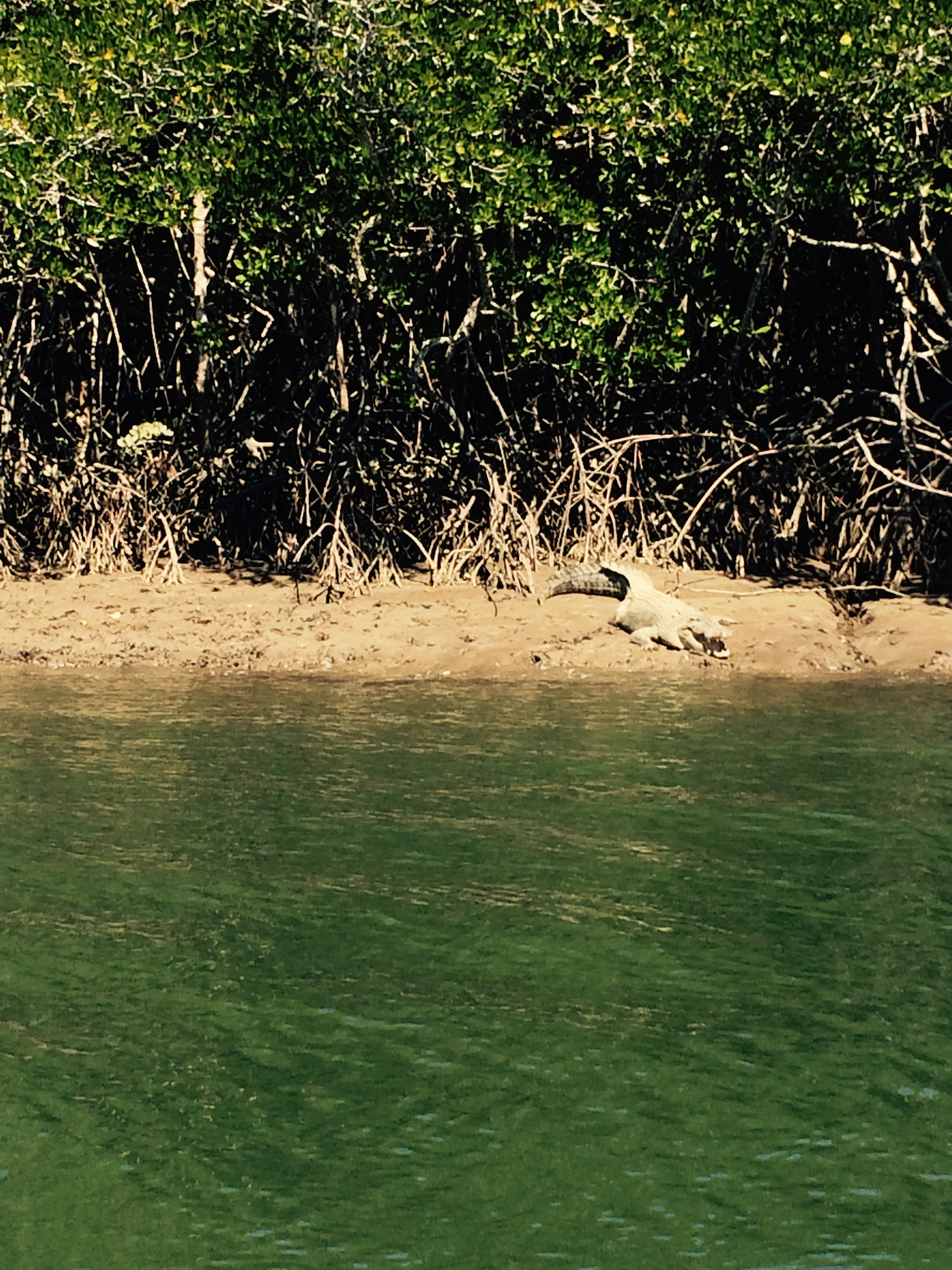 Crocs of Port Douglas
