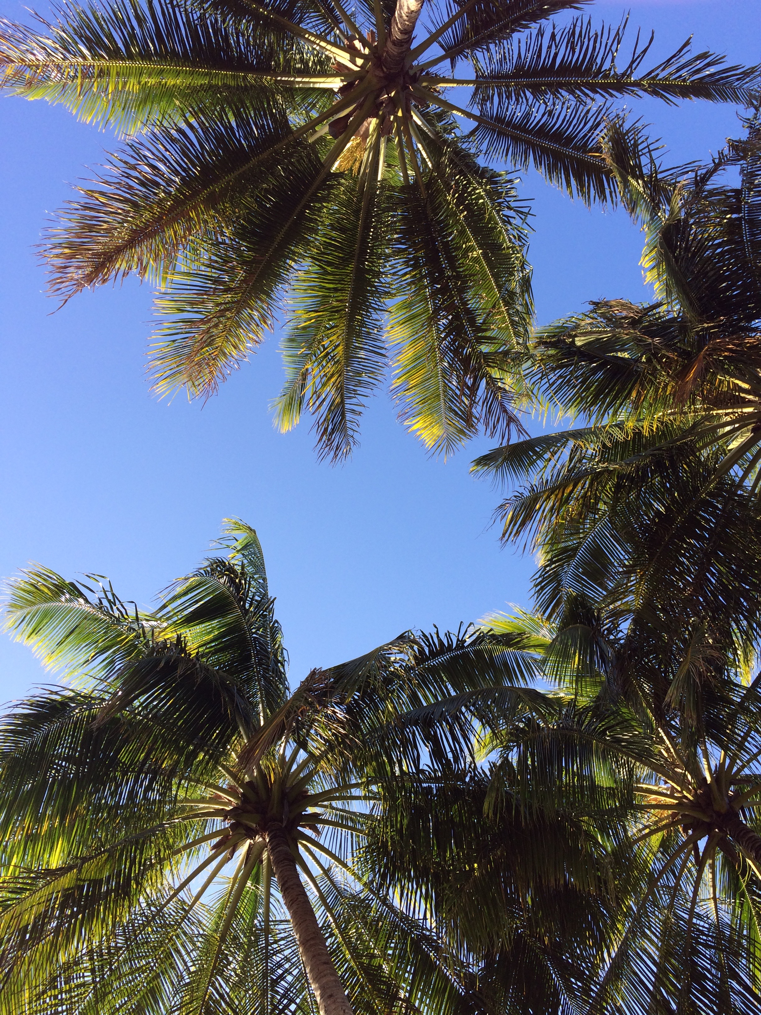 Palms of Port Douglas