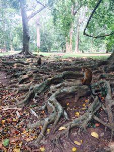 Royal Botanical Garden, Kandy