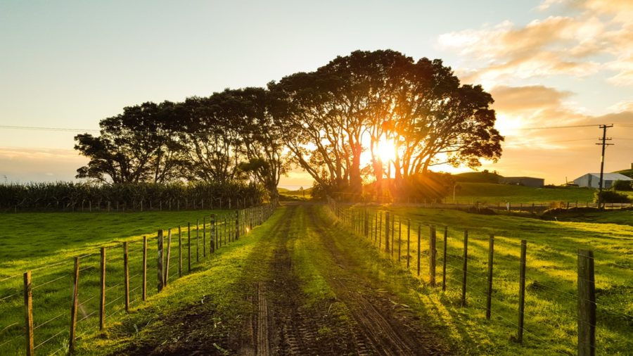 Best Places to visit in North Island, New Zealand in 7 Days